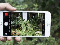 Thay camera sau iPhone 6 Plus khi chụp ảnh có đốm đen